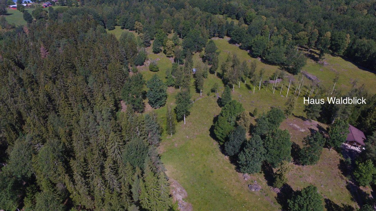 Mit Blick in den Wald - Haus Waldblick