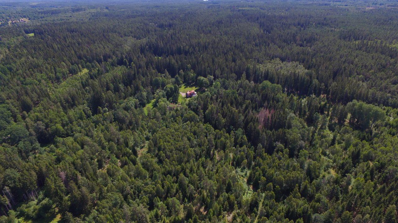 Das Ferienhaus mitten im Wald - tolle Alleinlage