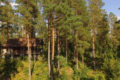Ruhige Lage im Kiefernwald